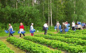 Работа в Финляндии для русских вакансии 2019 без знания языка