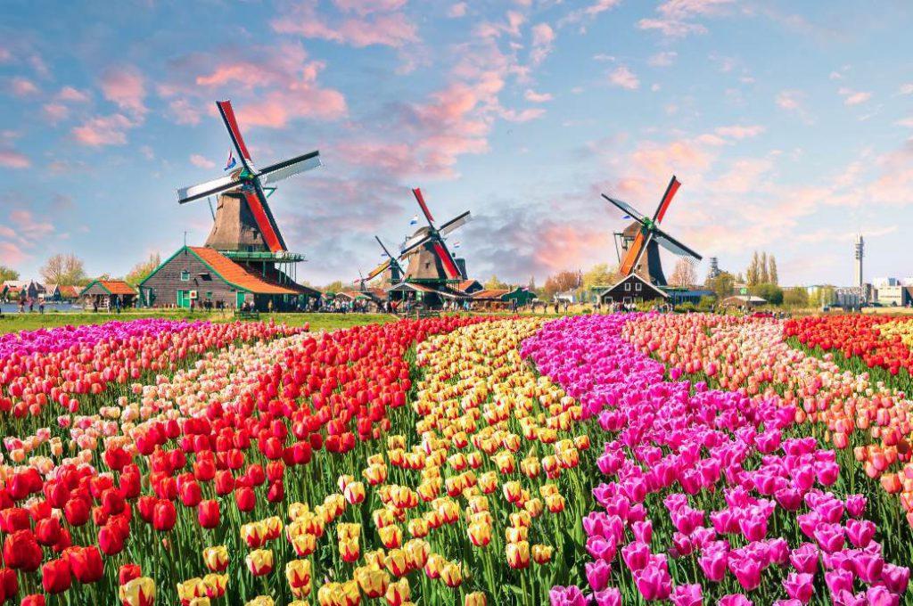Работа в Нидерландах для русских вакансии 2020 без знания языка